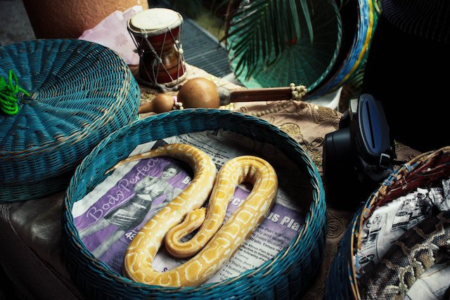 snakes-in-baskets