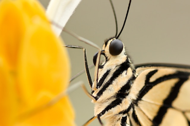 butterfly-close-up-on-yellow-flower