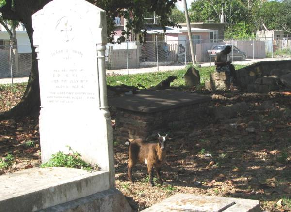 goats_and_graves
