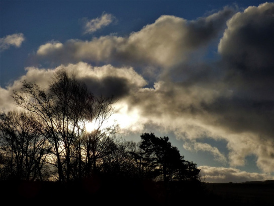 the image shows the sun behind the bare branches of winter trees in a blue sky darkened by clouds.