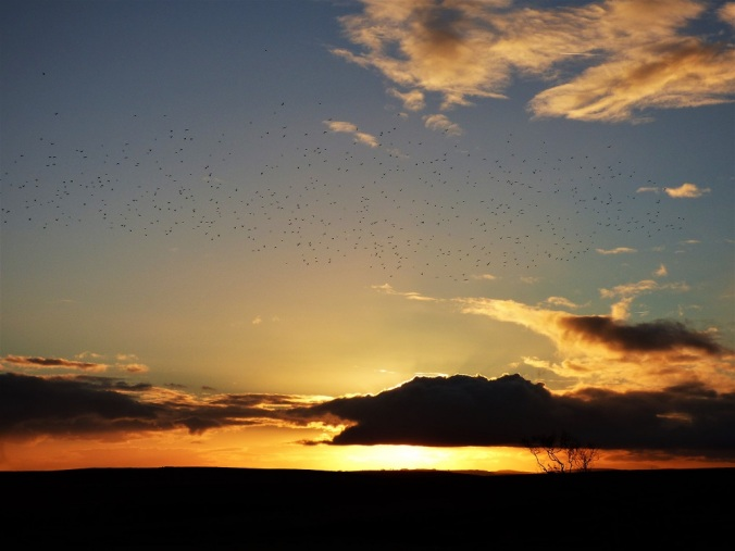 The image shows dark clouds and bare trees against a fiery sunset, with a murmration of starlings creating a cloud of their own.